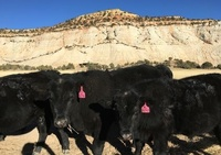Kate's Land & Cattle
