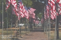 Picture of Macomb Flags of Love Postcard