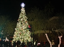 Picture of $100 Donation: Merry Main Street Christmas Tree Fund