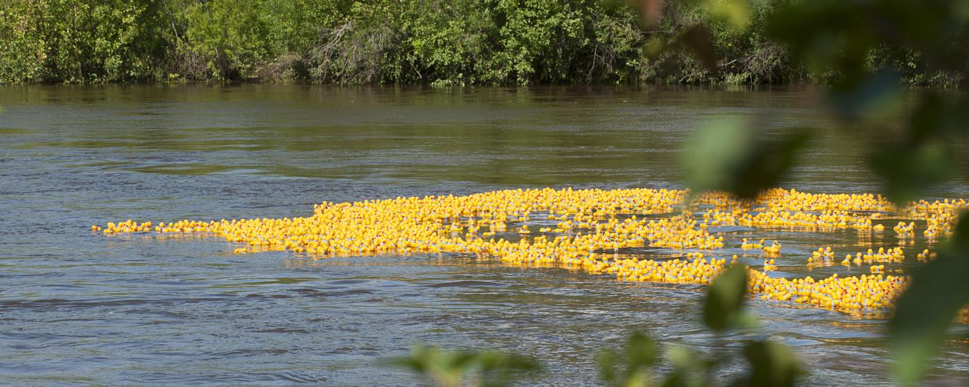 Duck-banner-3-w1400.jpg