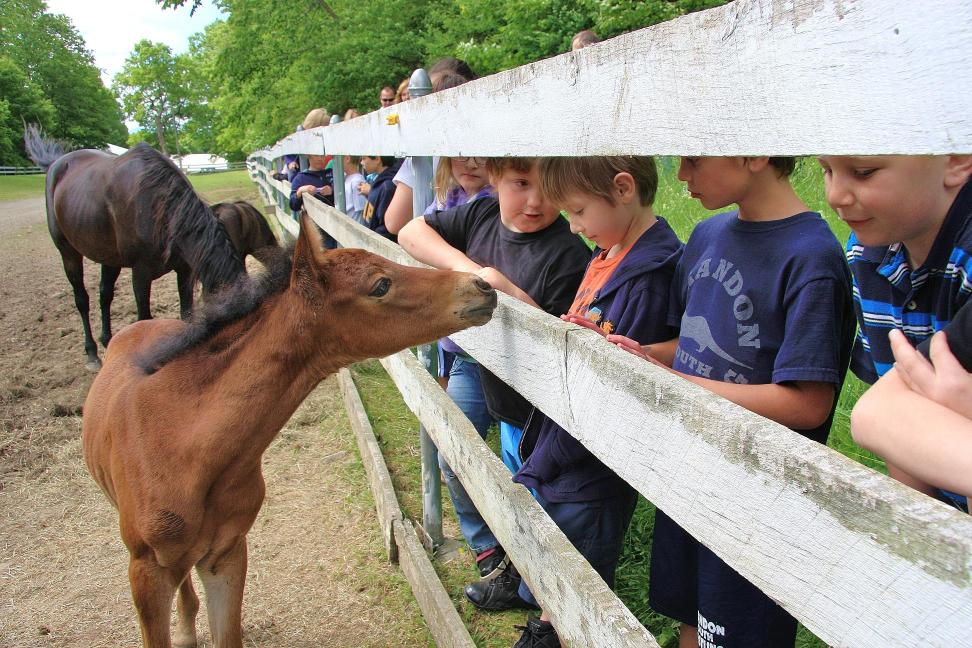 Foal Day at UVM Morgan Horse Farm