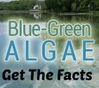 pagebanner_bluegreen_algae_rdax_100.jpg