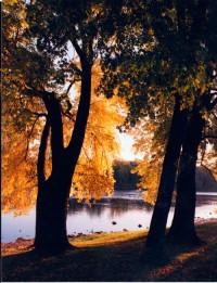 leaves-in-ellison.jpg
