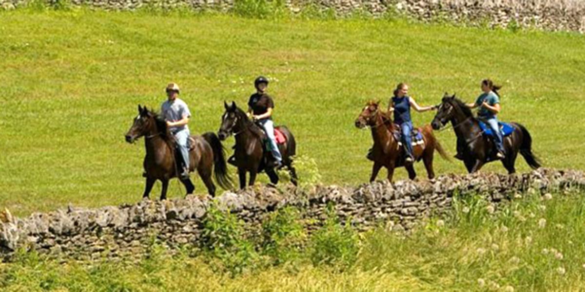 Shaker-village-horse.jpg