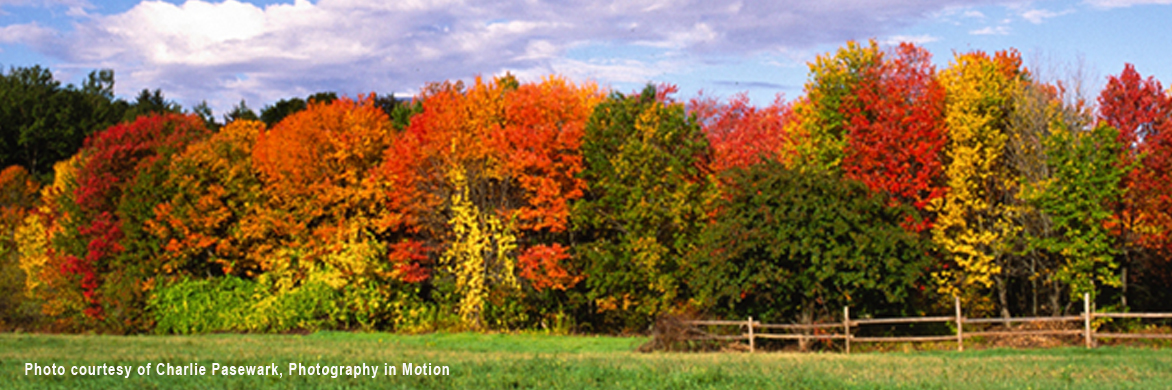 Autumn_palette_(CP)_web_photo.jpg
