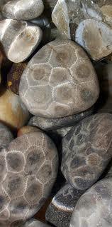 Find Petoskey Stones Petoskey Regional Chamber Of
