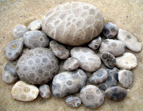 find petoskey stones petoskey regional chamber of commerce mi. Black Bedroom Furniture Sets. Home Design Ideas