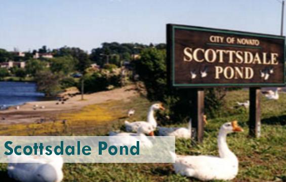 Scottsdale_Pond1_PARK.png