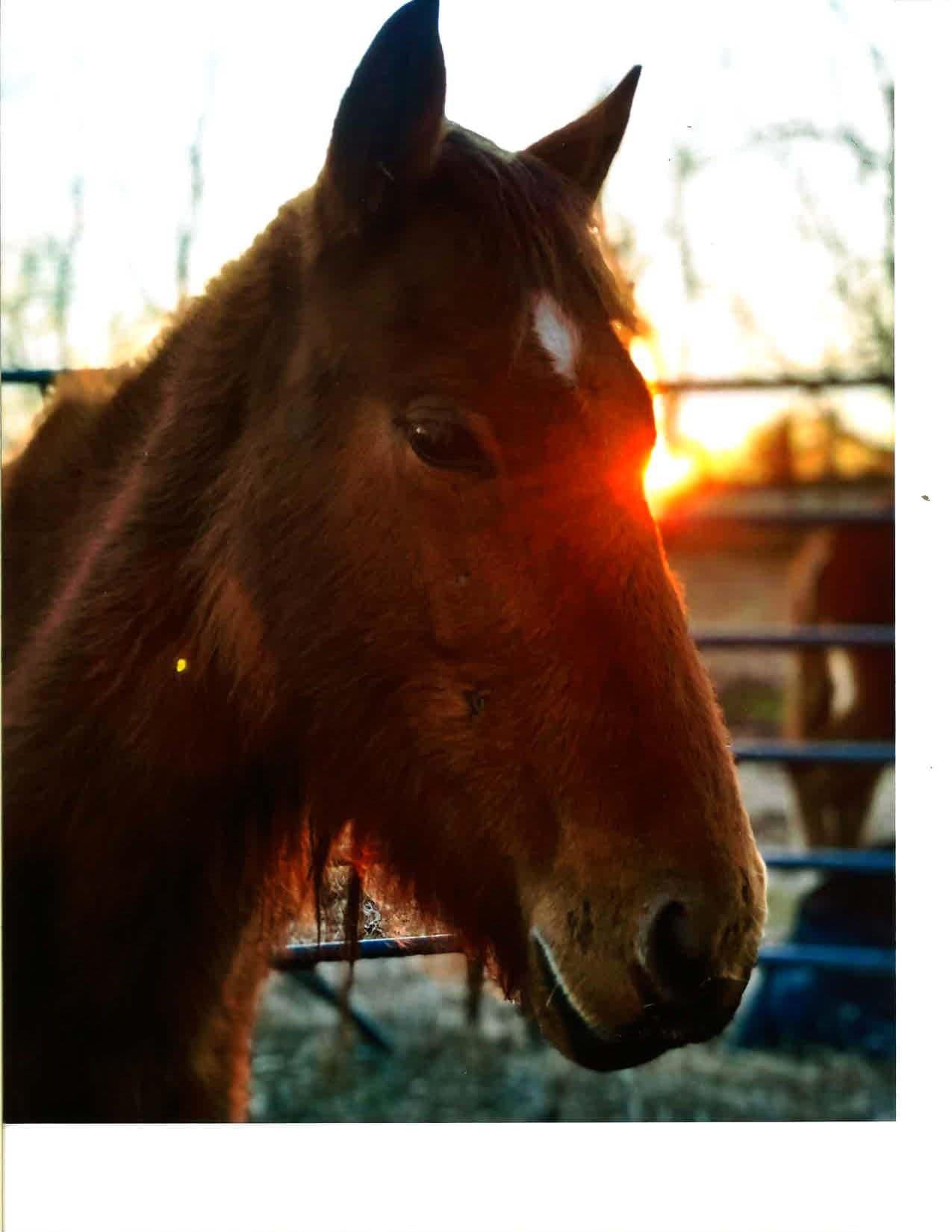 2018_Fort-Polk-Pony----Analiese-Gaffey-w1275.jpg