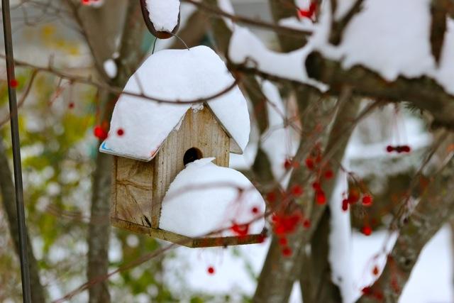 Winter_Scene_-_1.jpg