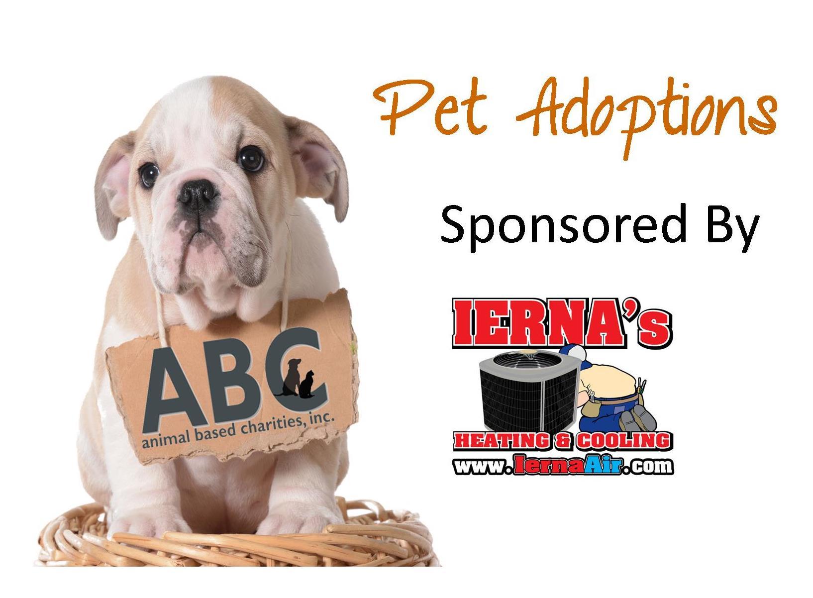 pet_adoptions.jpg