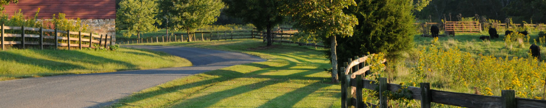 Photo of pasture