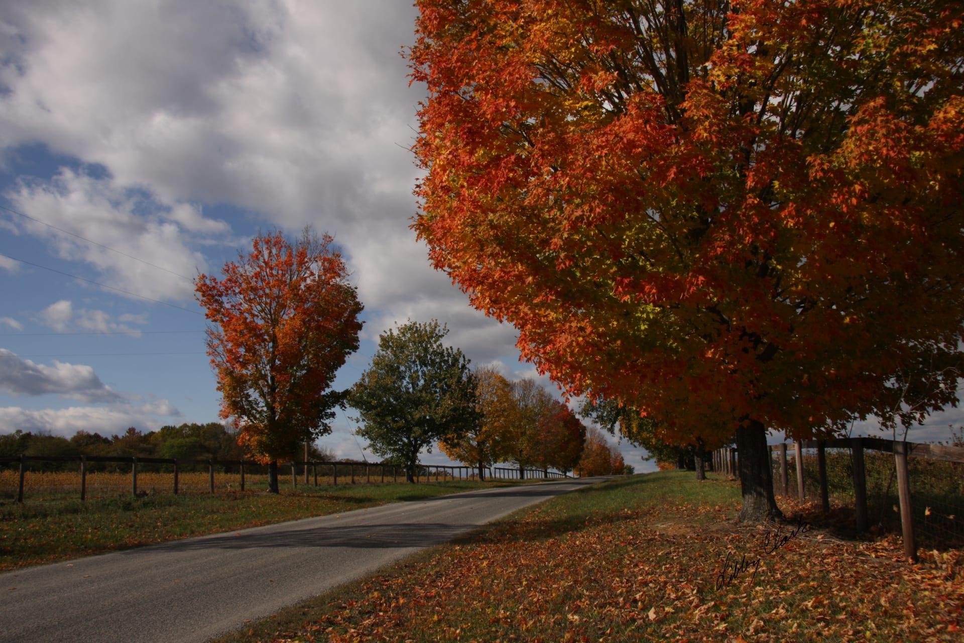 Fall-in-Goochland-(2)-w1920.jpg