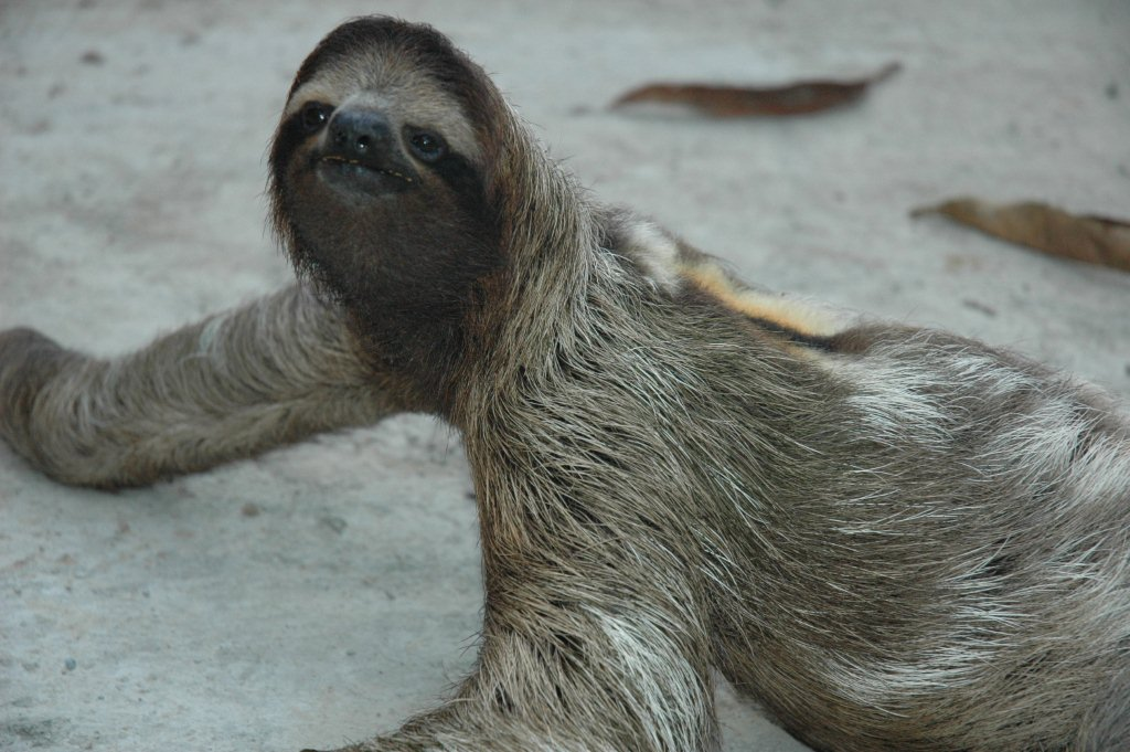 Photo of a sloth in Costa Rica