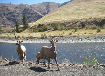 Wildlife along the Grande Ronde Canyonlands