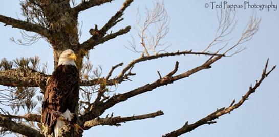 eagle_cropped.jpg
