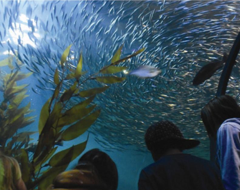 aquarium-by-the-bay.jpg