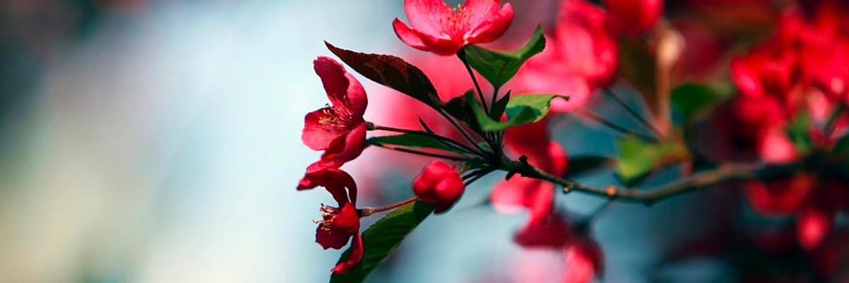MilacaChamber_Flower.jpg