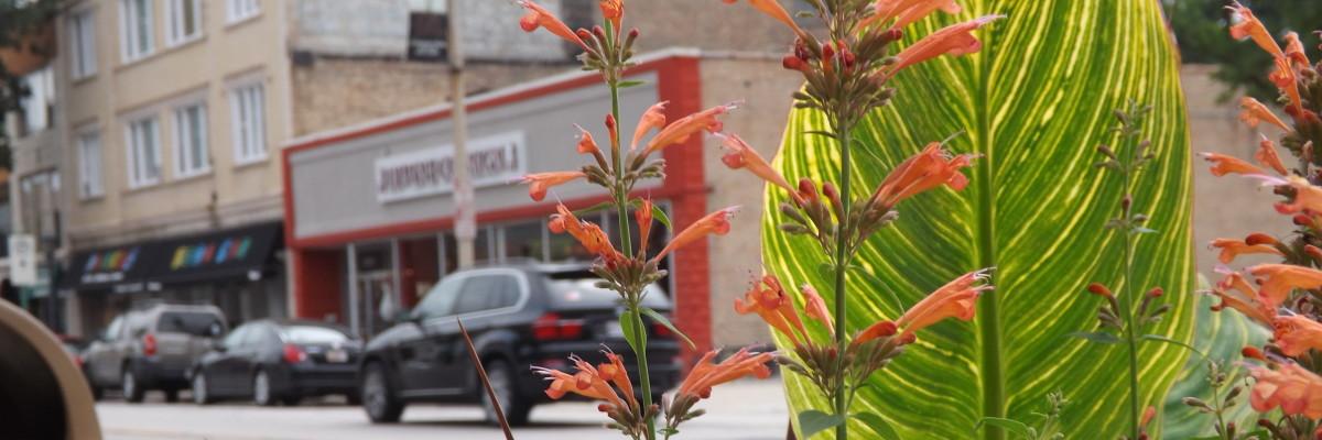 Southtown.JPG-w1200x400-4.jpg