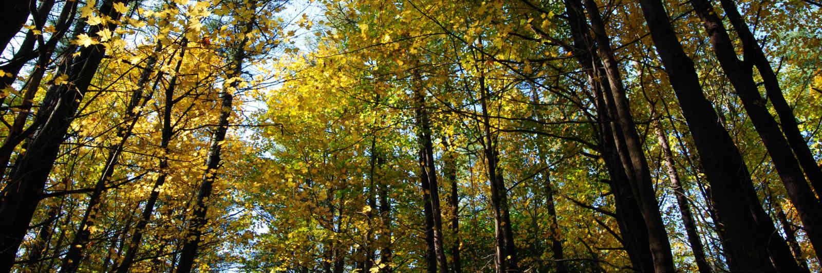 adirondack-trees.jpg