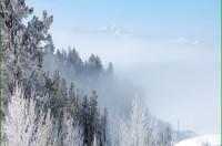 Frosty_trees1-w400.jpg