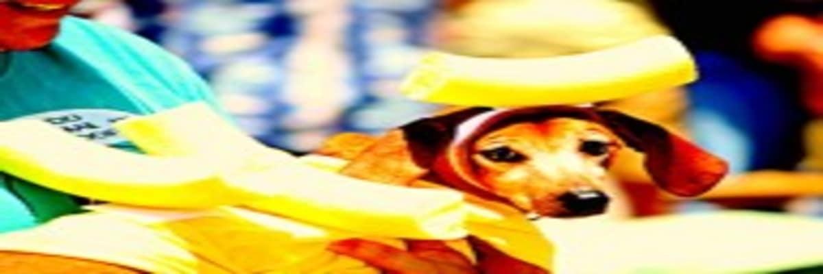 dachshund-w1200.jpg