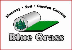 Blue-Grass.jpg