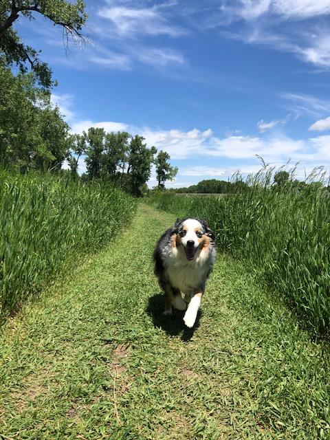 Happy dog, sweet grass county, big timber, montana, dornix park, big sky country, summer, blue sky