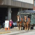 horse drawn wagon rides.jpg