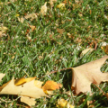 leaf460x290.png