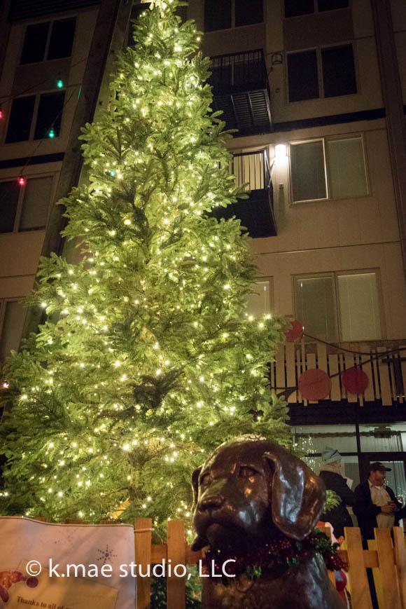Tree-Lighting_5.jpg