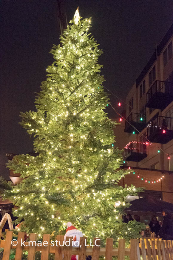 Tree-Lighting_7.jpg