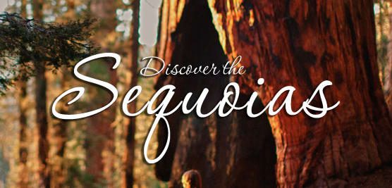 Discover-the-Sequoias-w556.jpg