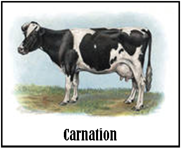 Carnation_Cow.png