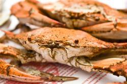 MemPhoto_crab.jpg