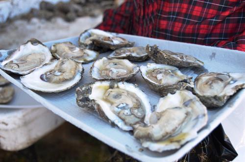 OysterFest October 30