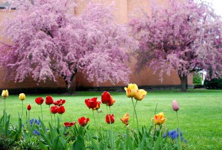 Springtime-w455.JPG