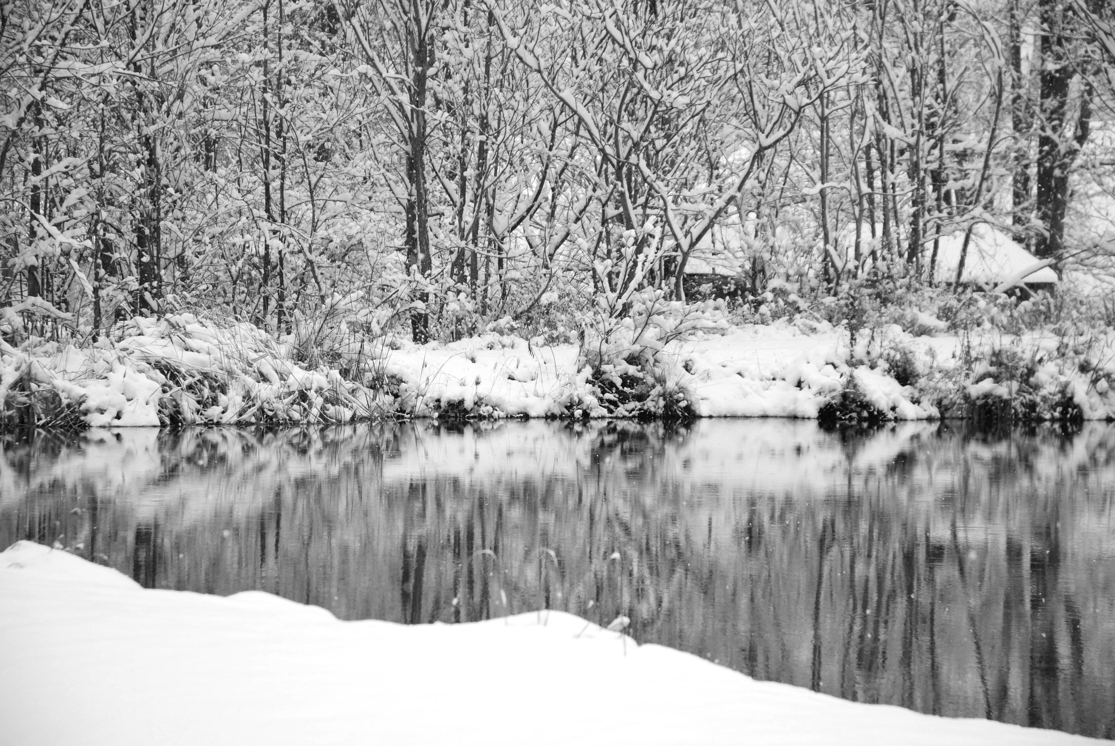 pond-scene-b-and-w.jpg