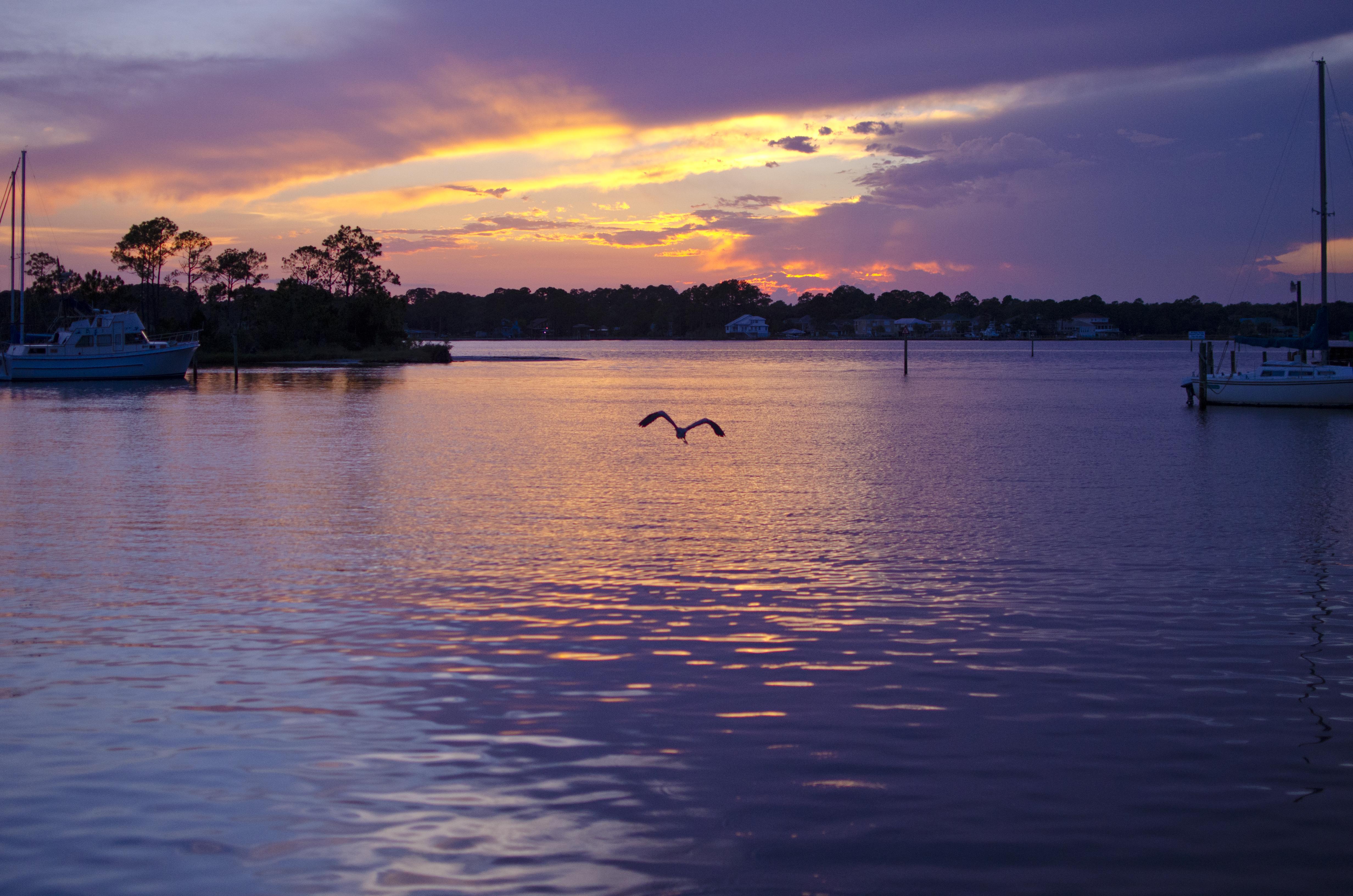 Omar-Wiseman---Pelican-Sunset.jpg