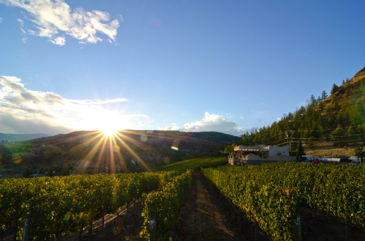 Watching the sun set over the vines at Thornhaven Winery in Summerland BC.