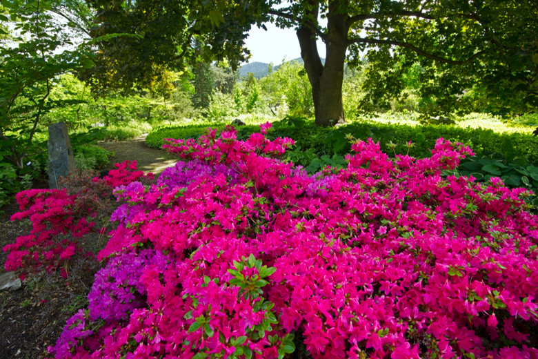 Flowers in full bloom at a gorgeous Summerland attraction, the Ornamental Gardens.
