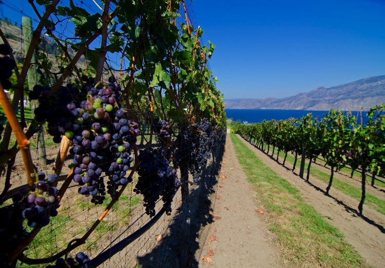 wineries-are-a-summerland-attraction.jpg