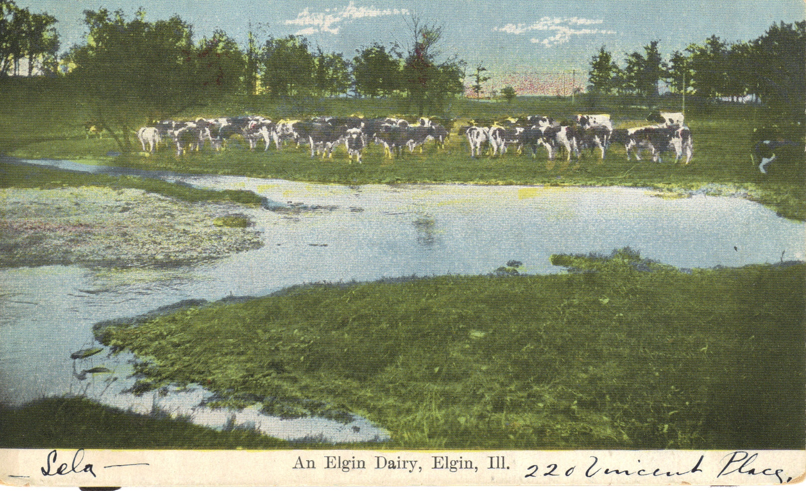 Dairy-Farm-1908.jpg
