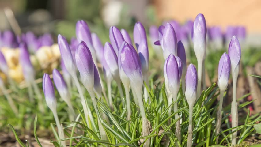 flower-buds.jpg
