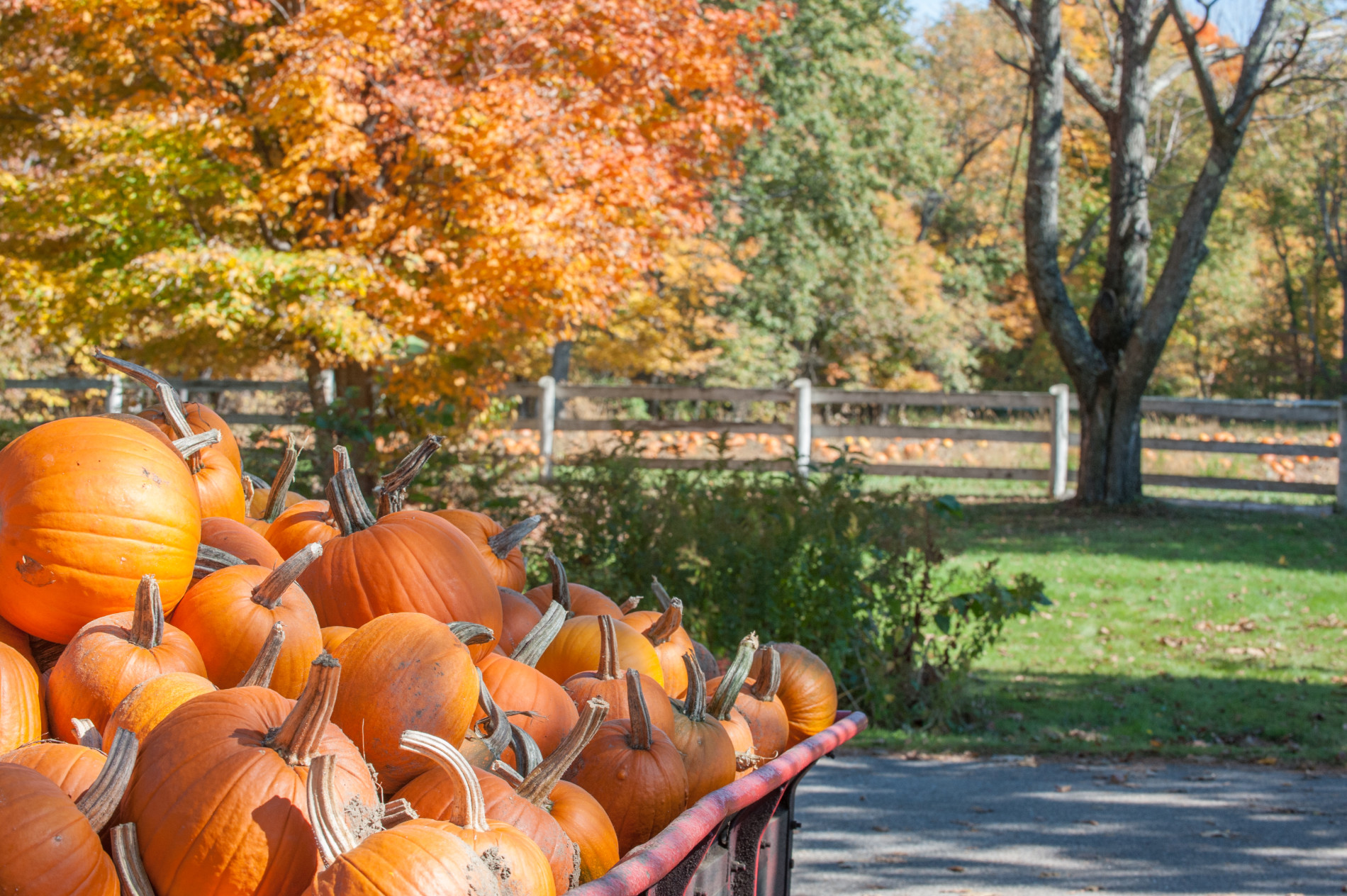 Carol-Savage-Photography---fall-scene-pumpkins-(21)(1)-w1900.jpg