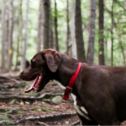 Pet dog friendly lodging in Bethel Maine