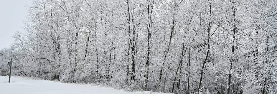 frosted-trees.JPG-w940.jpg