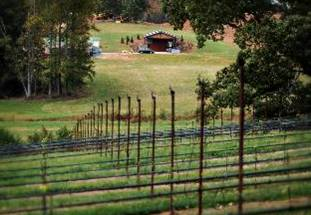 yonah-20mountain-20vineyards.jpg