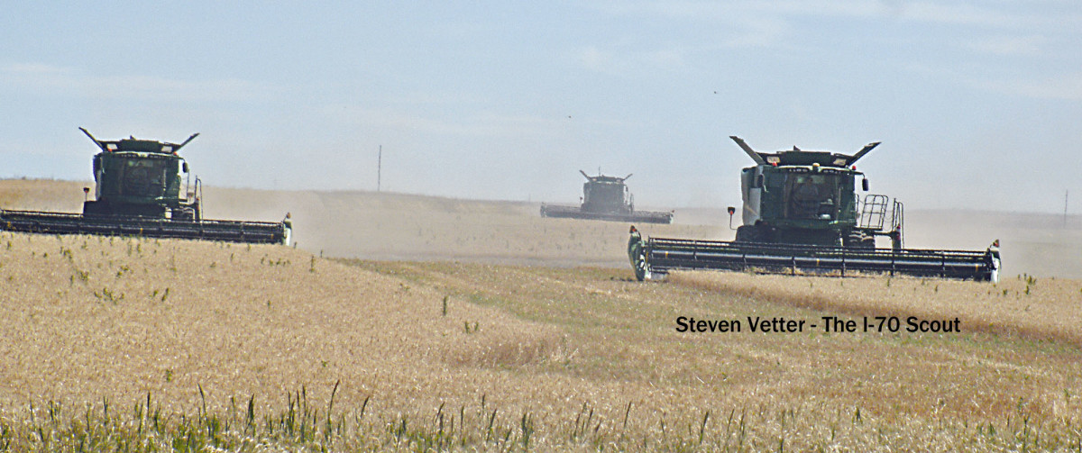 Wheat-Cutting(1).jpg