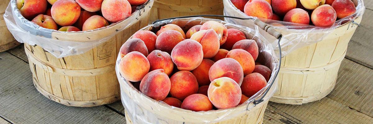 Peach-Bushels.jpg